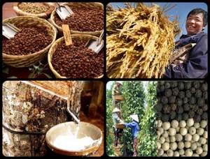 Chúng ta rất tự hào về các mặt hàng nông sản xuất khẩu: hạt tiêu, hạt điều đứng thứ nhất, gạo, cà phê đứng thứ 2, cao xu đứng thứ 3 trên thế giới. Rõ ràng sản phẩm nông nghiệp Việt nam do nông dân Việt nam làm ra đã góp phần nâng cao vị thế quốc gia nước ta trên trường quốc tế về mặt kinh tế